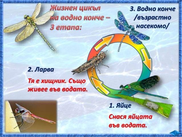  Край блатата и езерата плуват и намират храна , и Кои са техните приспособления за живот във водата?