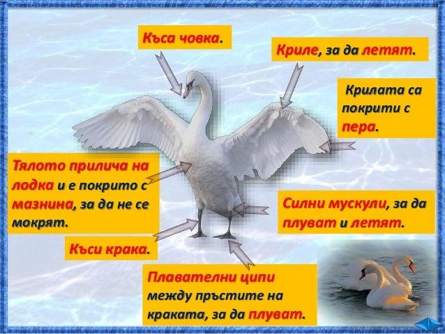  Освен в сладководните басейни живеят и други риби. шаран щука е хищник.  Храни се с по-дребни риби.  Спуска се към тях...
