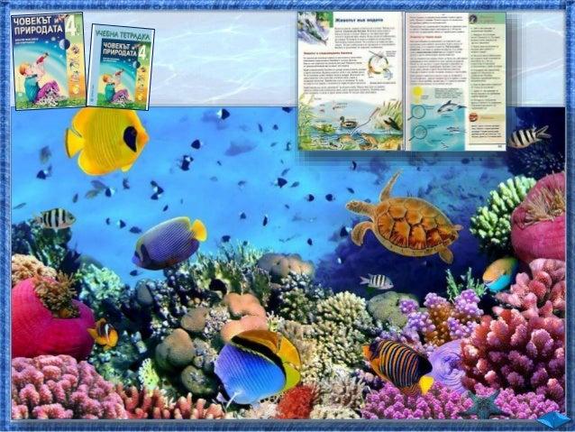 31. Животът във водата - ЧП, 4 клас, Булвест Slide 2