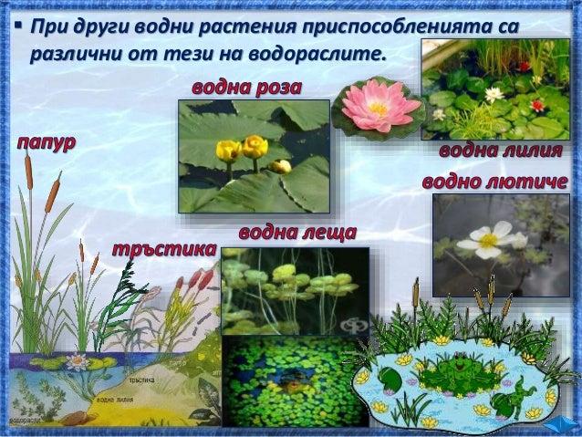 водорасли попова лъжичка шаран щъркел водорасли попова лъжичка шаран щука водорасли ларва на комар ларва на водно конче ша...