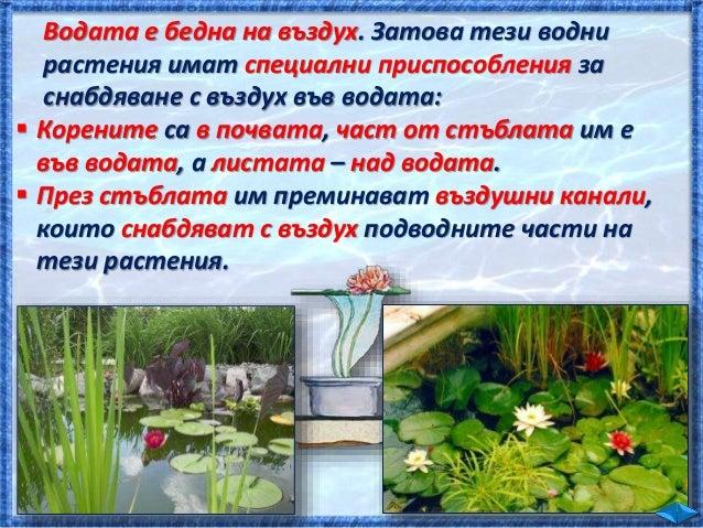 На рисунката ще откриете различни обитатели на Черно море. Някои от тях плуват във водата, а други са прикрепени към дънот...
