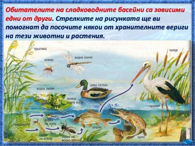 Най-многобройни са невидимите за човешкото око организми, които живеят във водата. Те се наричат . е съставен от дребни во...
