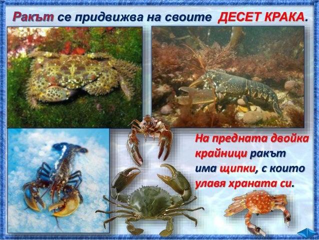 Навътре в морето плуват , и др. риби.