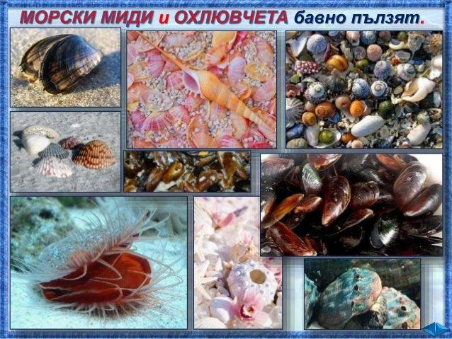 Както във всяко съобщество, обитателите на морето са свързани помежду си. Проследете пока- заната хранителна верига. 1 2 3...