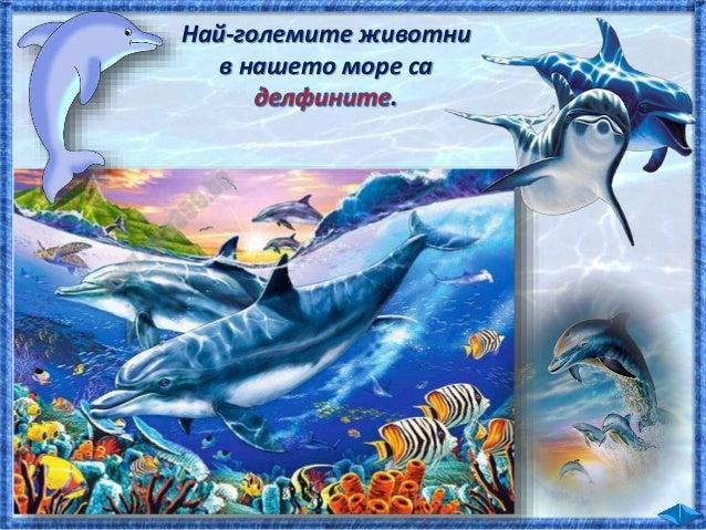 Усеща трептения на водата, предизвикани от рибата. Усеща трептения на водата и миризмата на рибата. Вижда рибата, усеща ми...