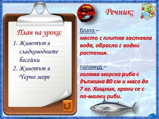 31. Животът във водата - ЧП, 4 клас, Булвест