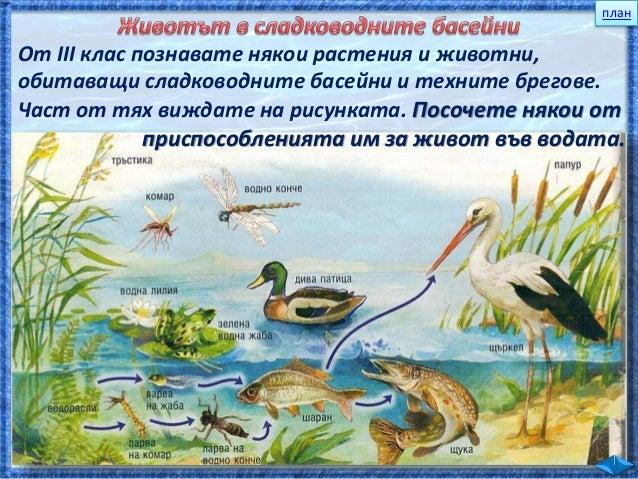 1. Яйце Снася яйцата във водата. 2. Ларва Тя е хищник. Също живее във водата. 3. Водно конче /възрастно насекомо/