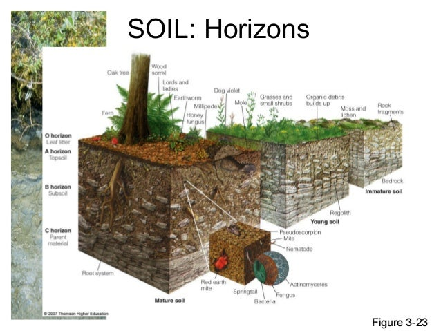 31 soil science by allah dad khan for About soil science