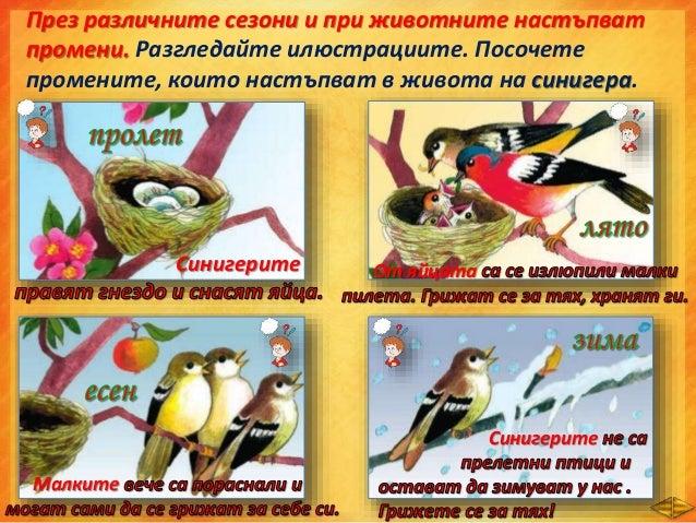  През пролетта птиците отлитат на юг.  През зимата времето е най-студено.  През лятото листата на дърветата пожълтяват ...
