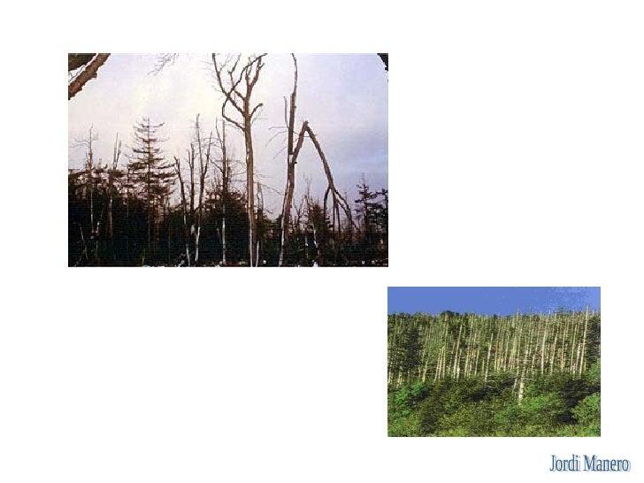 Què provoca l'efecte hivernacle?  Les emissions de determinats gasos (gasos d'efecte hivernacle). El més destacat és el C0...