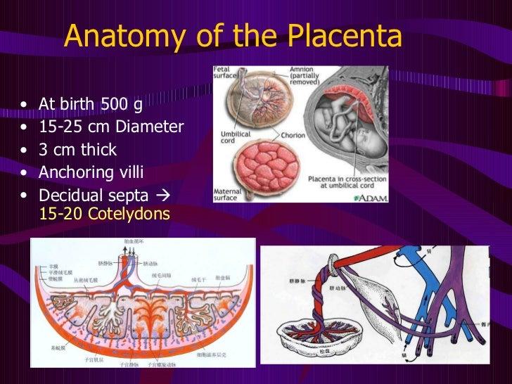 3[1].palcenta fetal membrane