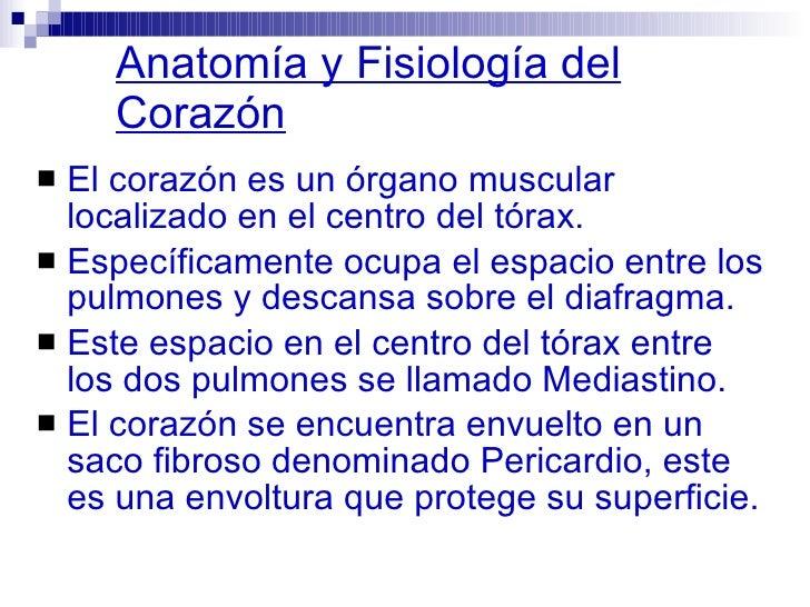 anatomia-y fisiologia-del corazon