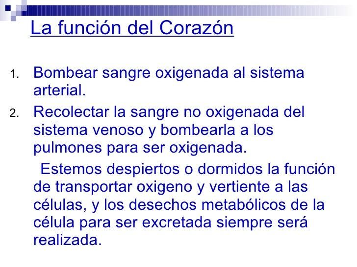 Atractivo La Anatomía Y Función Del Corazón Regalo - Anatomía de Las ...