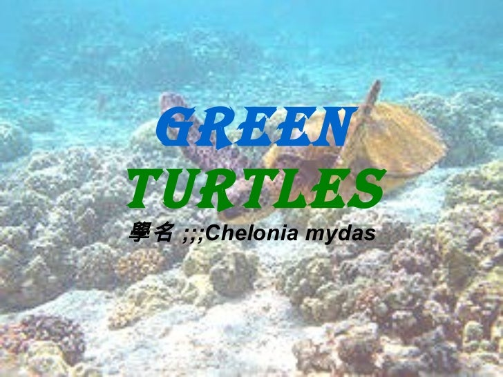 Green  turtles 學名 ;;;Chelonia mydas