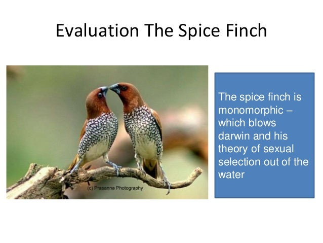 Sexual selection theory evaluation