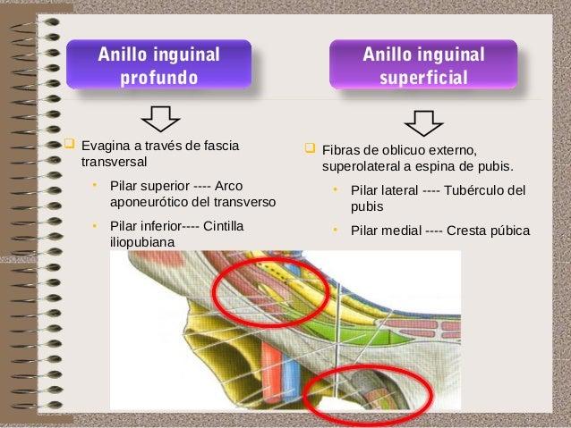 hernia inguinal y femoral On paredes y orificios del conducto inguinal