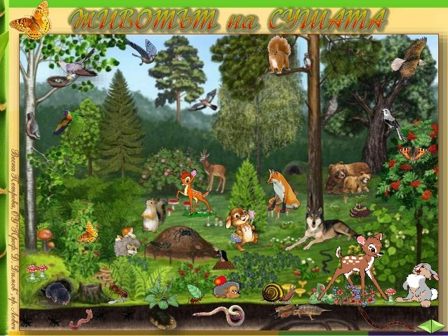 Условията за живот на сушата са много разнообразни. Затова растителният и животинският свят там е толкова богат.