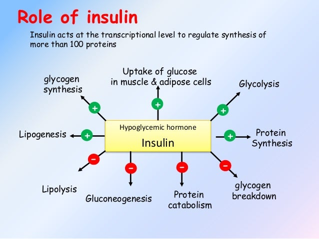 how blood sugar levels are regulated Blood sugar regulation is the process by which the levels of glucose are maintained by the body blood sugar levels are regulated by.