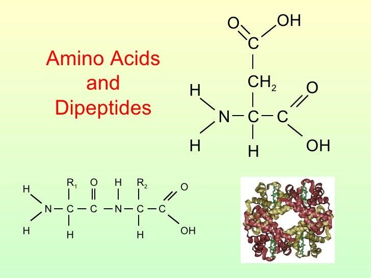 Amino Acids and Dipeptides CH 2 H H N C C OH O H C O OH H H N C C O H R 1 H N C C OH O H R 2