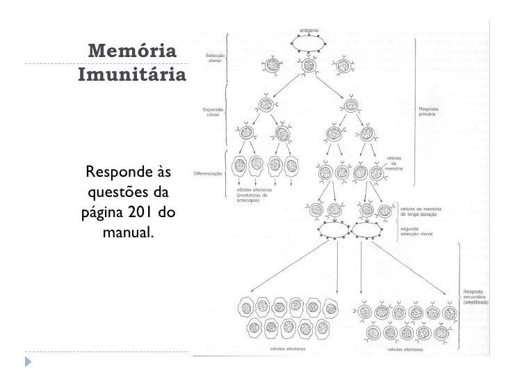 32 Sistema ImunitáRio Defesas Especificas