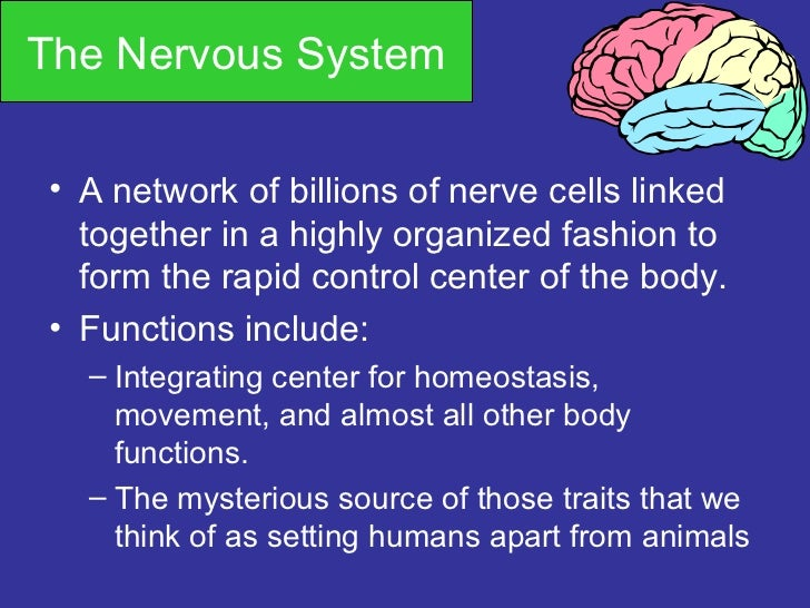 The Nervous System• A network of billions of nerve cells linked  together in a highly organized fashion to  form the rapid...