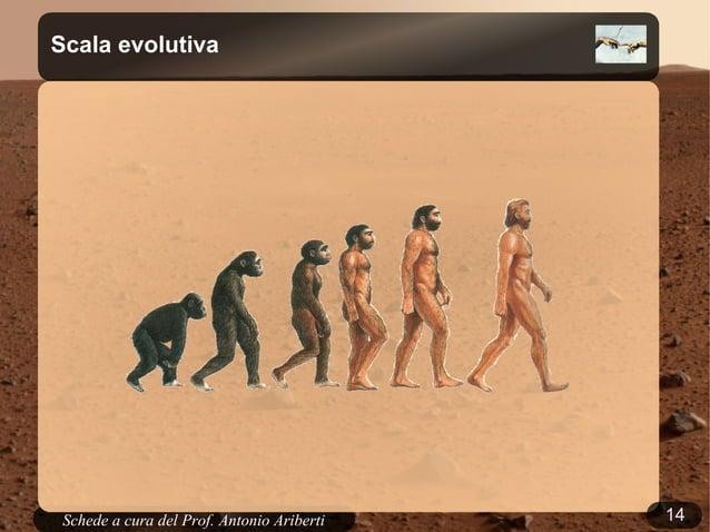 14Schede a cura del Prof. AribertiScala evolutiva