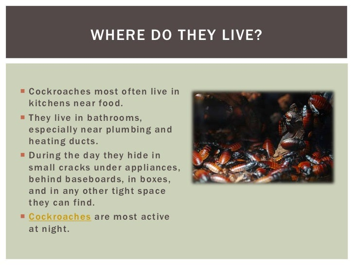 marvelous Getting Rid Of Cockroaches In Kitchen #7: Getting Rid Of Cockroaches Effective Services To Help Your House St\u2026