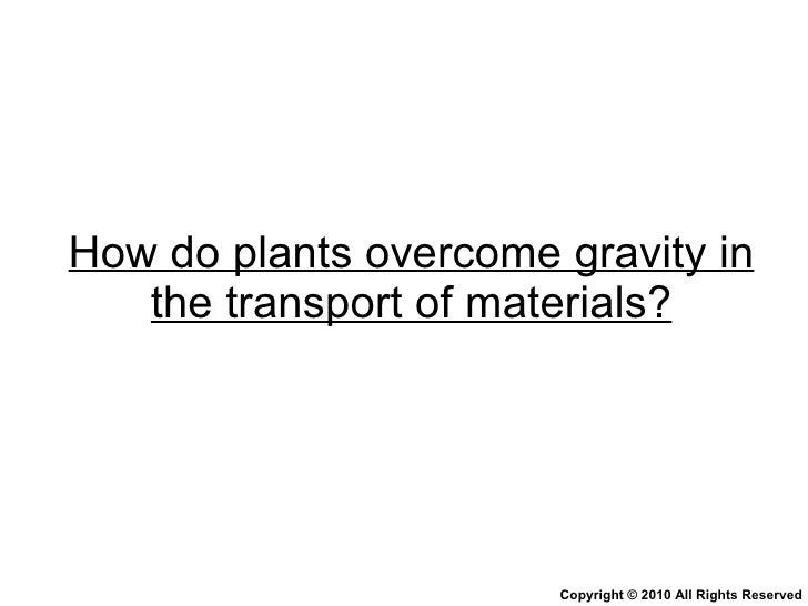 How do plants overcome gravity in the transport of materials? Copyright © 2010 All Rights Reserved