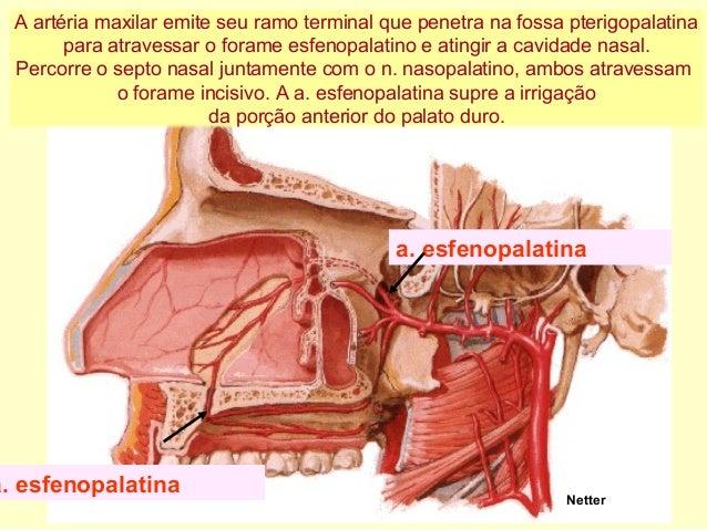 Anatomia De Cabea E Pescoo 1 Aula | Holidays OO