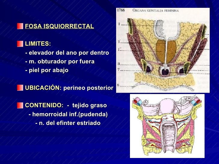 Excepcional Anatomía Fosa Isquiorectal Friso - Anatomía de Las ...