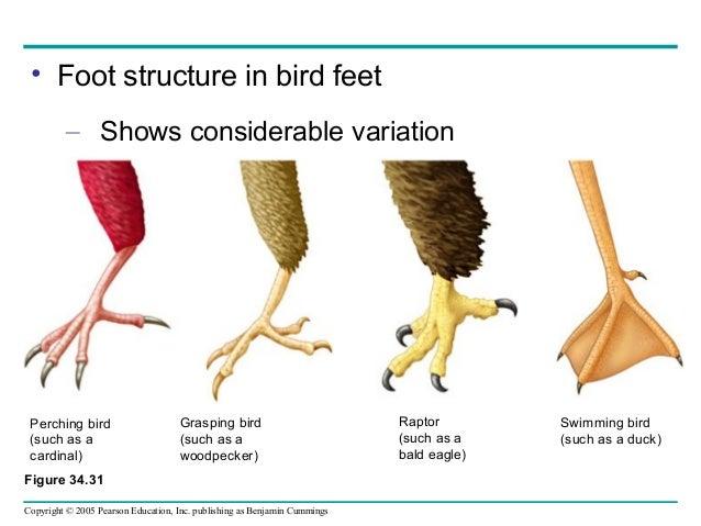 Different Bird Feet