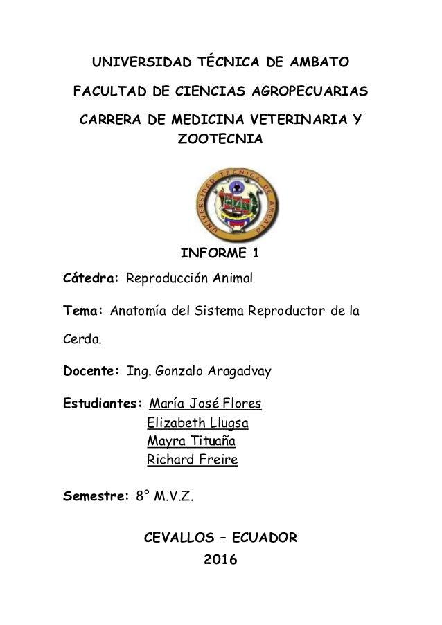 Dorable Anatomía De Reproducción Colección - Anatomía de Las ...