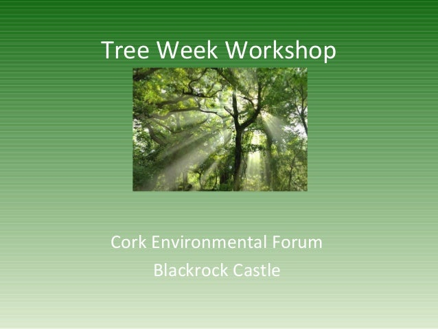 Tree Week Workshop Cork Environmental Forum Blackrock Castle