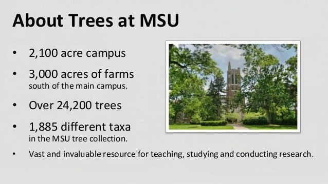 Urban Wood Repurposing at Michigan State University Slide 2