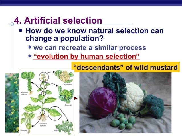 What Do Selective Breeding And Natural Selection Have In Common