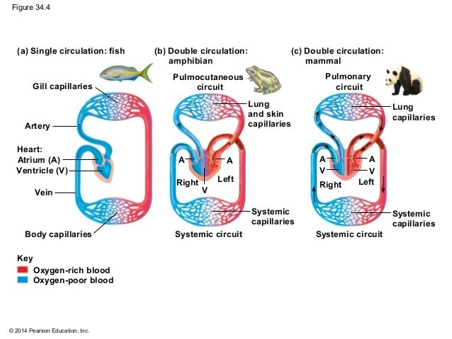 Biology in Focus - Cha...