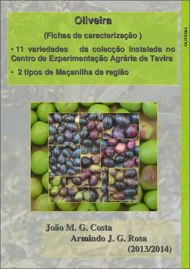 OLIVEIRA OliveiraOliveira (Fichas de caracterização )(Fichas de caracterização ) •• 11 variedades da colecção instalada no...
