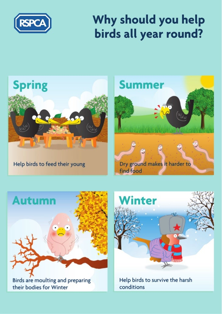 RSPCA - How to feed and care for garden birds