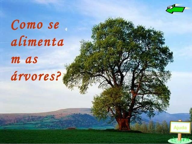 Como se alimenta m as árvores? Ajuda
