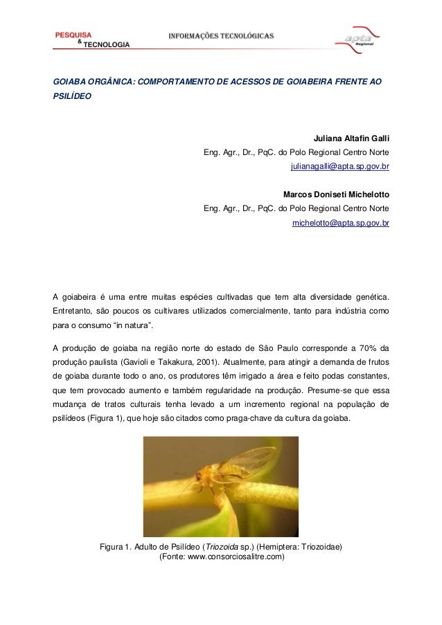 GOIABA ORGÂNICA: COMPORTAMENTO DE ACESSOS DE GOIABEIRA FRENTE AO PSILÍDEO  Juliana Altafin Galli Eng. Agr., Dr., PqC. do P...