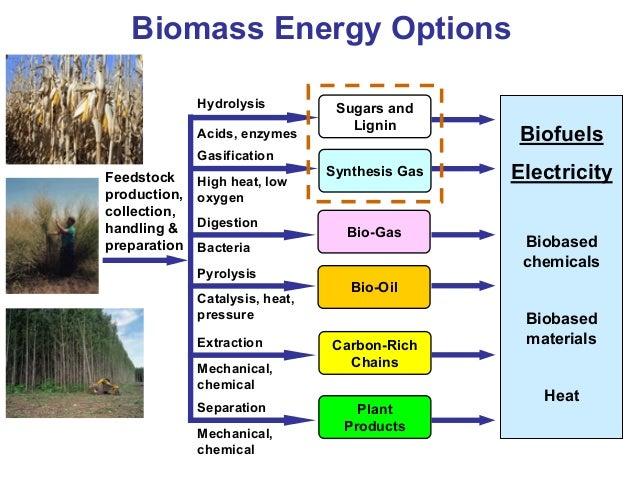 Electricity Through Biomass