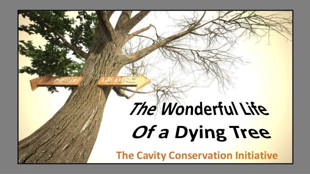 The Cavity Conservation Initiative