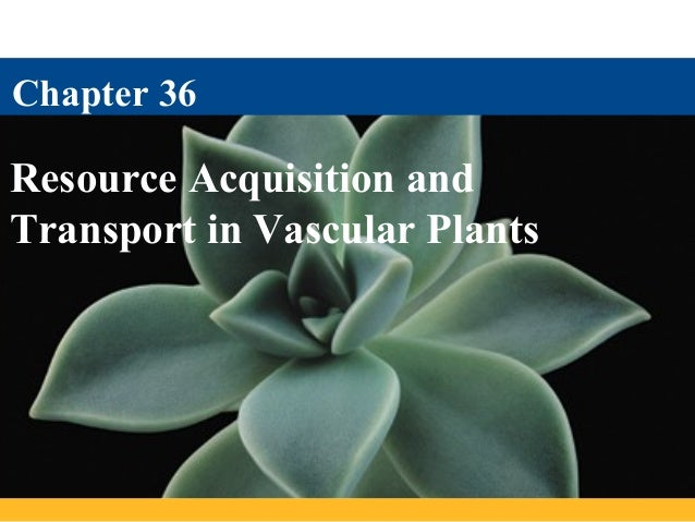 Chapter 36Resource Acquisition andTransport in Vascular Plants