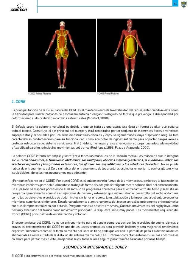 Increíble Diagrama De Músculos Isquiotibiales Molde - Imágenes de ...