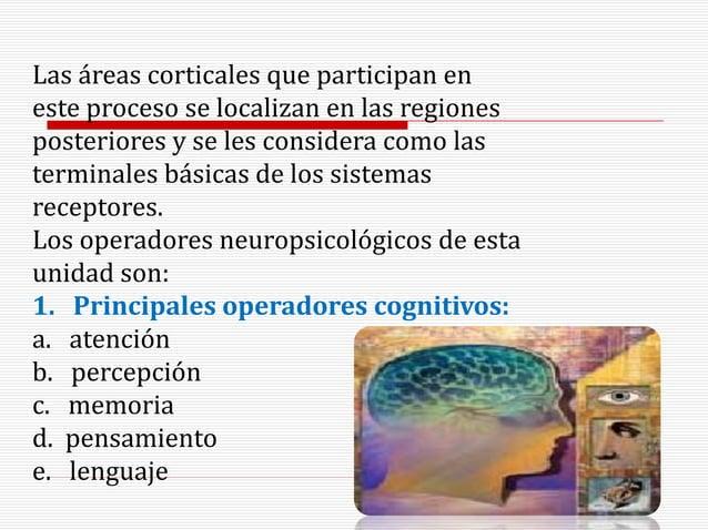 Las áreas corticales que participan en este proceso se localizan en las regiones posteriores y se les considera como las t...