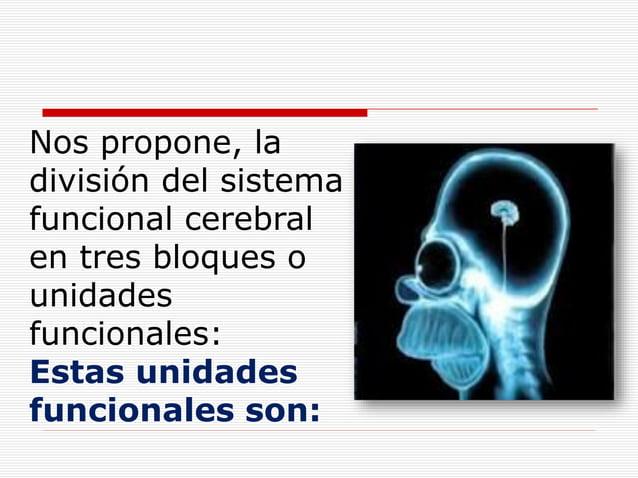 Nos propone, la división del sistema funcional cerebral en tres bloques o unidades funcionales: Estas unidades funcionales...