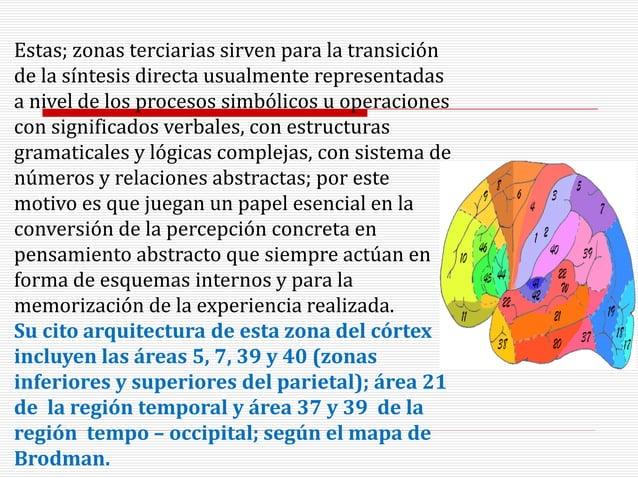 Estas; zonas terciarias sirven para la transición de la síntesis directa usualmente representadas a nivel de los procesos ...