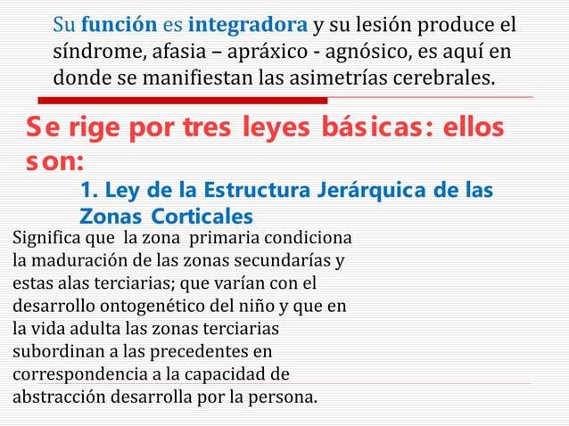 2. Ley de la Especificidad Decreciente Ya que los grupos neuronales de las zonas primarias cumplen funciones específicas, ...