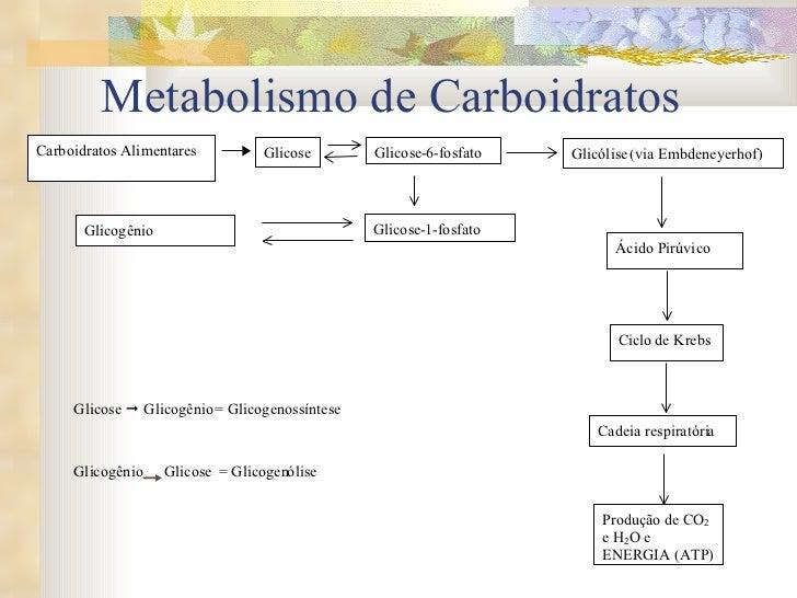 Metabolismo de Carboidratos Carboidratos Alimentares Glicose Glicose - 6 - fosfato Glicose - 1 - fosfato Glicogênio Glicól...
