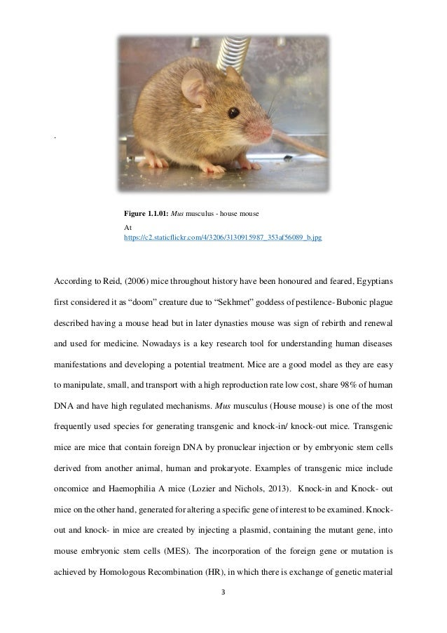 an analysis of the bubonic plague in the history of diseases Neglected diseases plos medicine's neglected diseases section began with the launch of the journal in october 2004 up until february 2008, the section focused on tropical infectious diseases, such as buruli ulcer, trachoma, and hookworm.